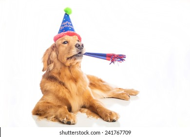 A golden retriever dog celebrating a birthday