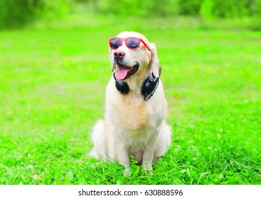 Golden Retriever dog in a red sunglasses with headphones is listens to music on the grass