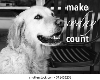 golden retriever dog with saying - make today count