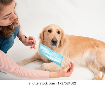 Golden retriever dog wearing medical mask for protection from virus isolated. medicine, pets and pandemic concept. Pet care animal life quarantine at home