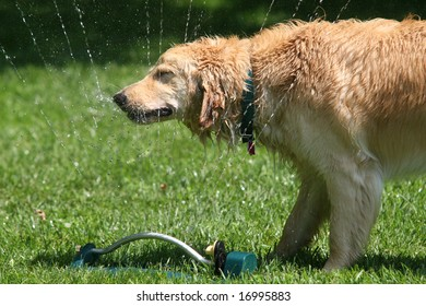 Dog and Sprinkler Stock Photos, Images & Photography