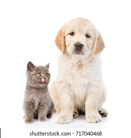 golden retriever and a licking kitten. isolated on white background.