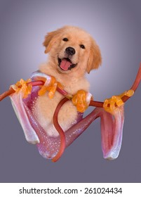 A golden retriever puppy has the body of a red-eyed tree frog.