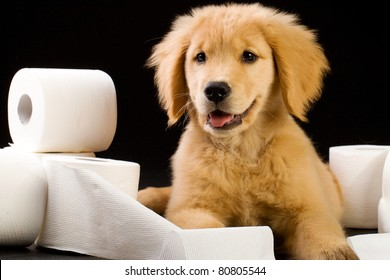 Golden Retriever Puppy laying on and in a pile of soft, fluffy toilet paper.