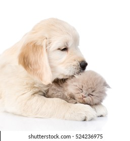 golden retriever puppy licking the kitten. isolated on white background