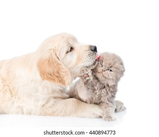Golden retriever puppy licking a small kitten. isolated on white background