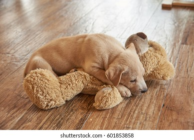 The Golden retriever puppy is lying on top of a brown bear.
