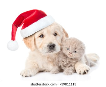 Golden retriever puppy in red christmas hat hugging a small kitten. isolated on white background