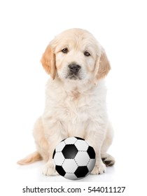 Golden retriever puppy with soccer ball. Isolated on white background