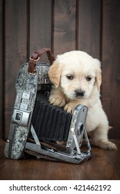 Golden retriever puppy with vintage camera