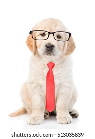 Golden retriever puppy wearing glasses and a red tie. isolated on white background