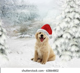 Golden Retriever puppy wearing a Santa hat on  a wintry background