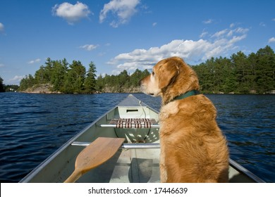 A golden retriever sits comfortably in his canoe, looking to the side.