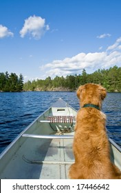A golden retriever sits comfortably in his canoe.