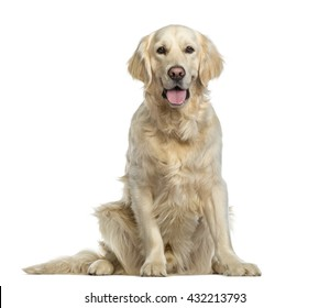 Golden Retriever sitting, isolated on white
