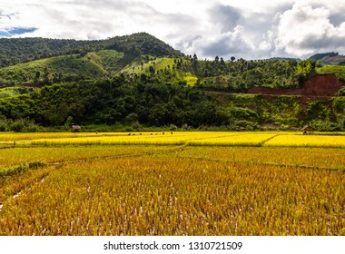 Golden Rice Field, a beautiful natural beauty on mountain in Nan Khun Nan  Rice Terraces,Nan Province, Thailand