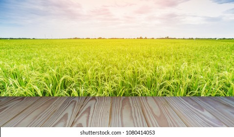 Golden rice field with colorful sky background and wooden floor foreground.
