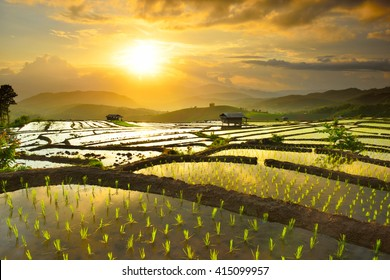 Golden rice fields in the countryside of ThailandThe beautiful sunset at Terraced Paddy Field in Mae-Jam Village , Chaingmai Province of Thailand