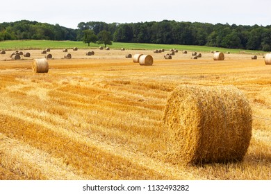 Golden rolls of hay on the fields in France