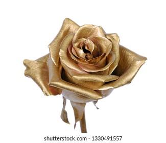 golden rose isolated on white background.