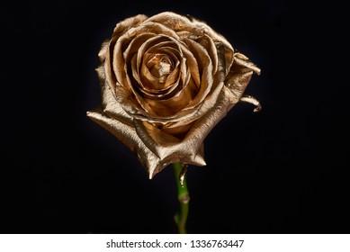 Golden rose on black background