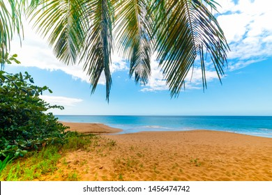 Golden sand in La Perle beach in Guadeloupe, French west indies. Lesser Antilles, Caribbean sea