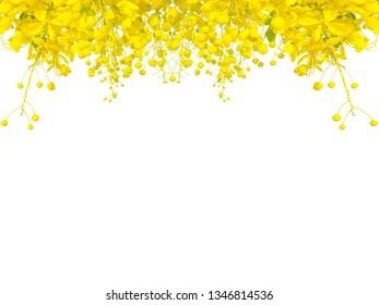 Golden shower tree (Cassia fistula) in Thailand Songkran festival isolate on white background,ratchaphruek flower