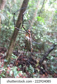Golden Silk Orb Spider with male