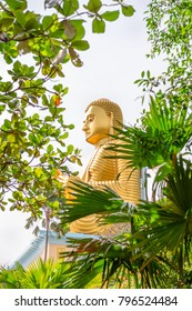 Golden sitting Buddha statue in green tropical trees leaves frame with selective focus on the face
