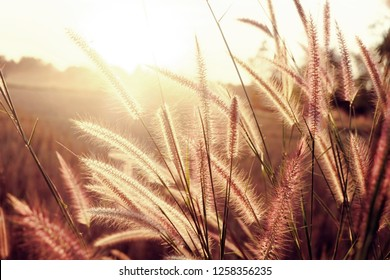 Golden soft light and sunset in the reeds and meadow.