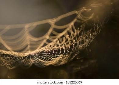 Golden spiderweb in the morning sunlight