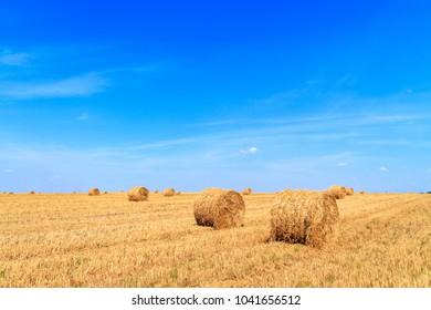 Golden straw stubble field in autumn