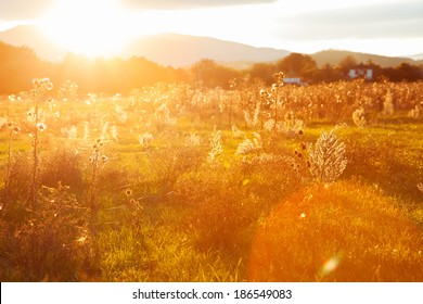 Golden summer evening on the meadow on mountains , rural summer backgrounds