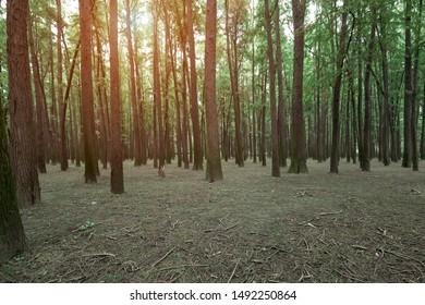 Golden sun beams streaming through idyllic forest