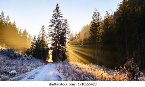 golden sun rays in wild slovakian nature