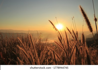 Golden sun rise shining with silhouette field grass flowers on the mountain travel viewpoint background
