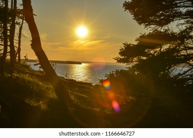 The golden sun setting over the ocean and casting a sunspot on the trees overlooking the water. There's trees on both sides of the picture. Clouds are low on the horizon.