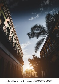 The golden sun shining brightly behind trees in the streets of Mazatlan, Mexic in a bright blue sky