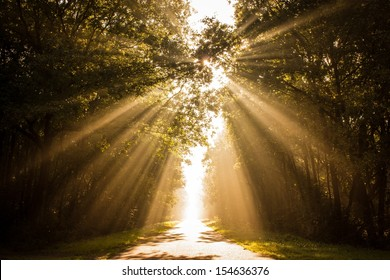 Golden sunbeams