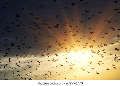 Golden sunrise and bird in the background