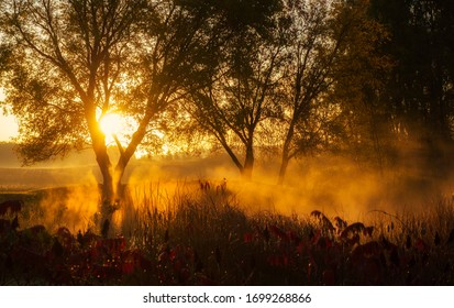 Golden sunrise over a foggy rural pond in Clare County.