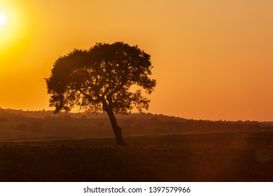 Golden sunset behind a tree on the plains of Alentejo, southern Portugal