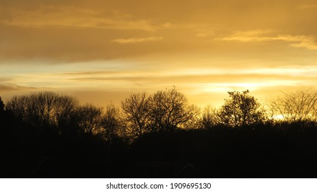 Golden sunset behind the trees