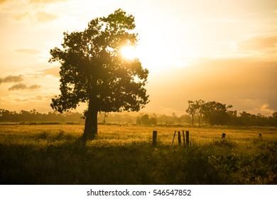 Golden sunset light shining through a large tree