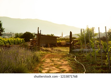 Golden Sunset at Local Farm - Stari Grad, Croatia
