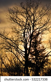 Golden Sunset on a Cold Winter's Day in Minnesota - Silhouetted Tree Without Leaves