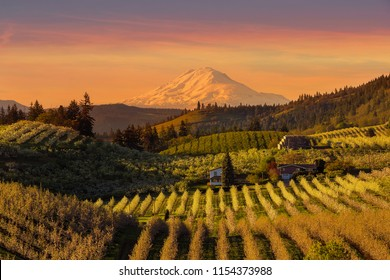 Golden sunset over Mount Adams and Hood River Valley pear orchards during sunset
