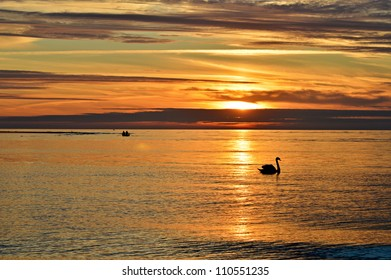 Golden sunset over the sea and silhouette of a swan