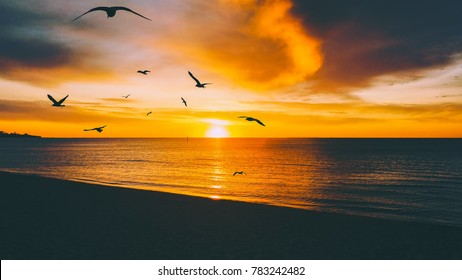 Golden sunset over tranquil ocean beach, with seagulls silhouettes flying over setting sun