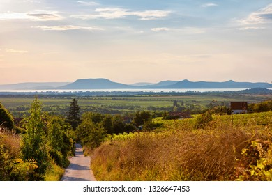 Golden sunset over vineyards with the Badacsony mountain and the Lake Balaton in Hungary